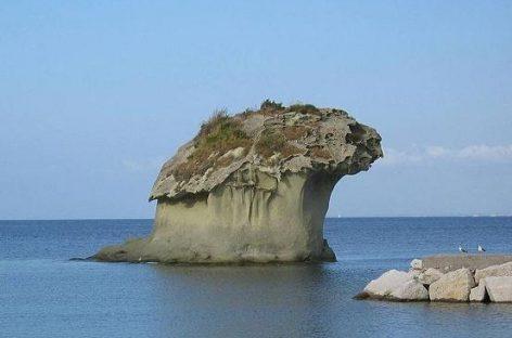 Saures Wasser löst Meerestiere auf
