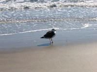 Strand-Urlaub